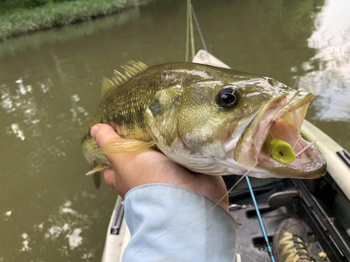 Bass Fishing